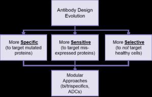 Antibody design evolution in oncology therapeutics