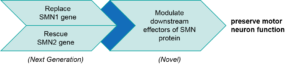 Functional Classes of Existing and Emerging Spinal Muscular Atrophy (SMA) Therapeutics